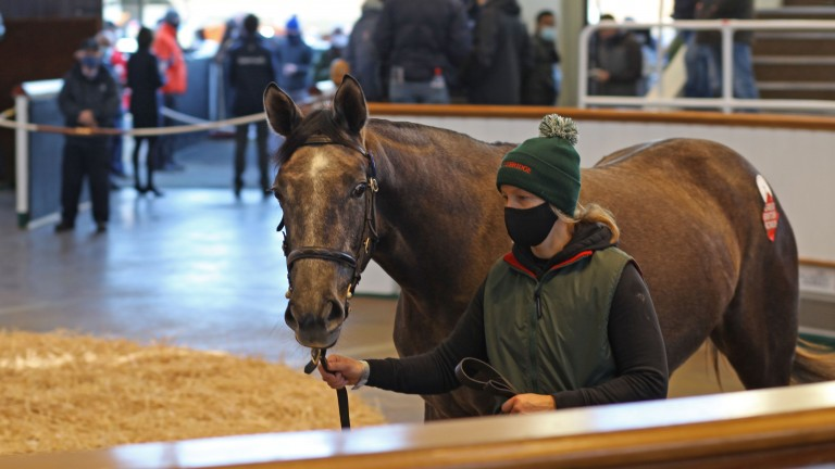Lot 7: the Sea The Stars filly out of Alla Speranza fetches 260,000gns
