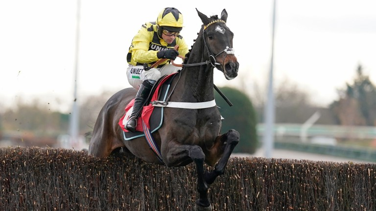 Shishkin: Supreme winner is looking to continue his exciting chase career in the Grade 2 Wayward Lad Novices' Chase