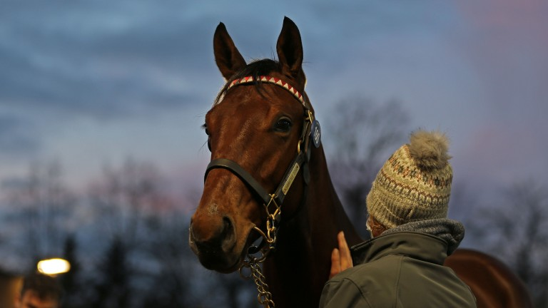 Lot 160: the Sea The Stars colt out of Talent awaits his turn in the Tattersalls ring