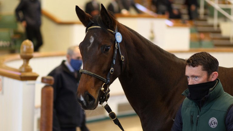 Alcohol Free's half-sister exits the ring