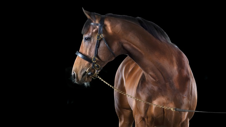 Churchill, the dual Guineas winner who will see his first crop hit the track in 2021
