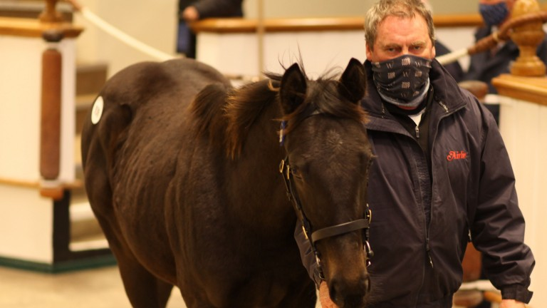 Lot 939 was the joint second most expensive colt foal sold at this sale