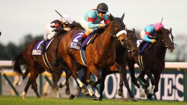 Almond Eye: enjoyed a dazzling end to her career in the Japan Cup