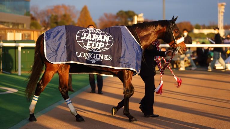 Almond Eye: Japan's superstar mare is in foal