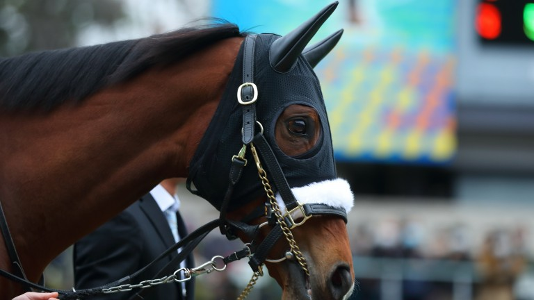 Almond Eye: bowed out last November following a brilliant career