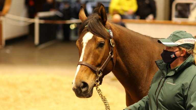 Lot 1,379: Calming Effect in the Park Paddocks ring before being signed for by Katsumi Yoshida at 400,000gns