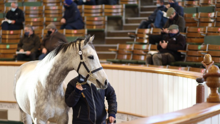 Shena's Dream: dam of Miss Amulet sells for 280,000gns to Charlie Gordon Watson Bloodstock and Al Wasmiyah Stud