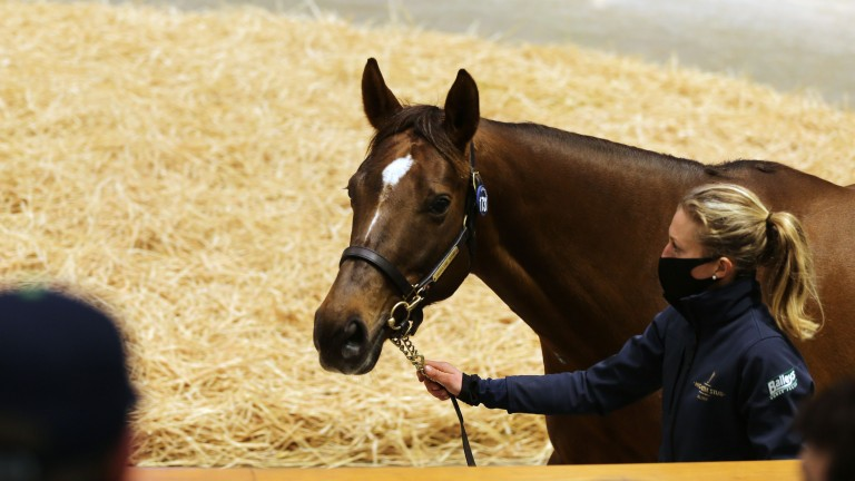 Lot 1,731: Beach Frolic in the Tattersalls ring