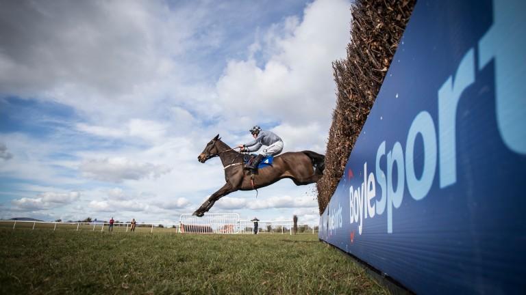 Castlegrace Paddy: has earned over €170,000 across 17 lifetime starts