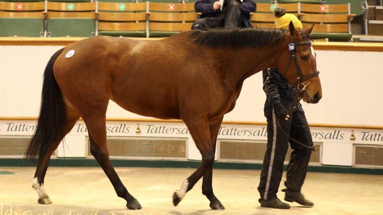 Lot 2,195: Banmi brings a winning bid of 21,000gns