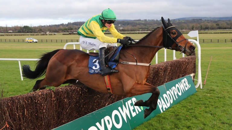 Cash Back: fell at the first in a Grade 2 at Naas last month