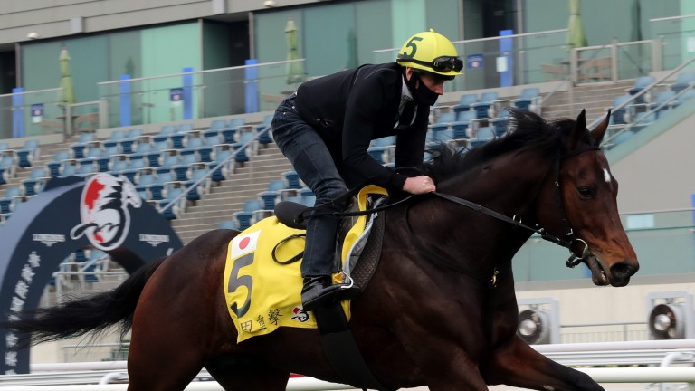 Danon Premium has a workout under William Buick in preparation for the Longines Hong Kong Cup