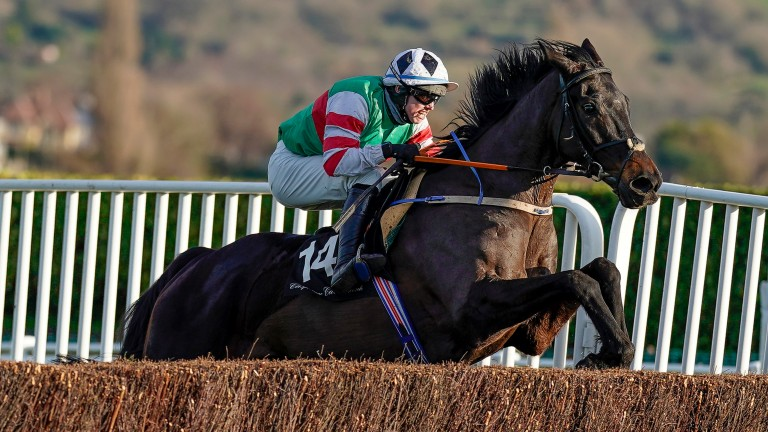 Chatham Street Lad: could he be a contender for the Ryanair Chase?