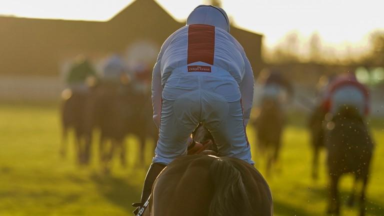 Goshen: finished last at Cheltenham on Saturday