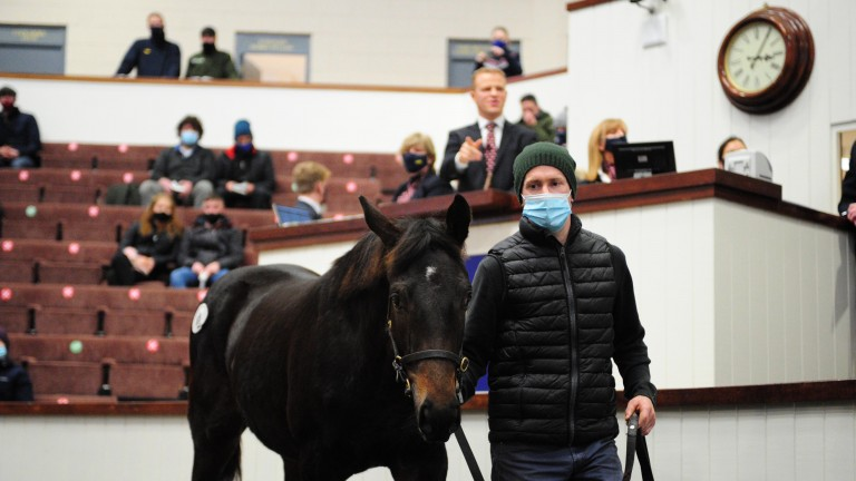 Kapgarde's only representative, offered by Ballincurrig House Stud, was another popular lot