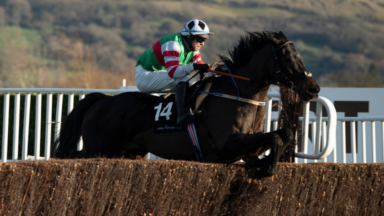Chatham Street Lad: runaway Cheltenham winner lines up in this competitive heat