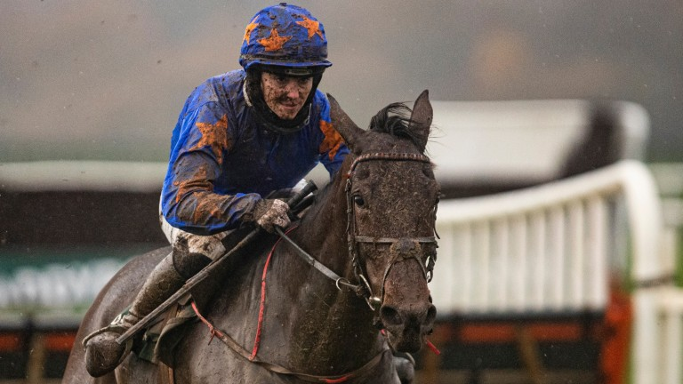 Dreal Deal: stayed on from last to first to win the Grade 2 at Punchestown
