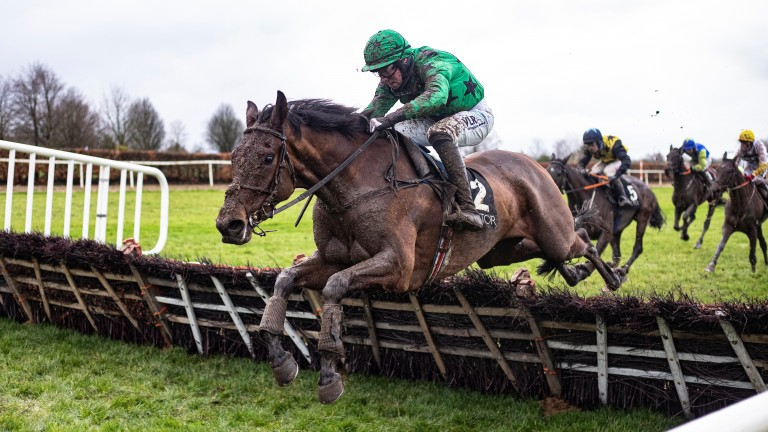 Ashdale Bob: Grade 2-winning novice hurdler could step up to the highest level at Naas on Sunday