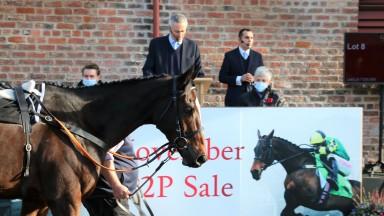 Jonbon in the Yorton Farm sales ring