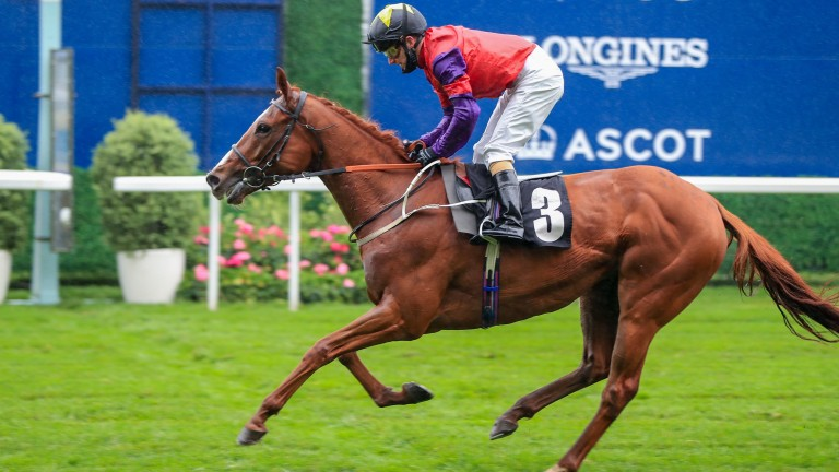 Rochester House bids for a hat-trick at Newcastle on Monday