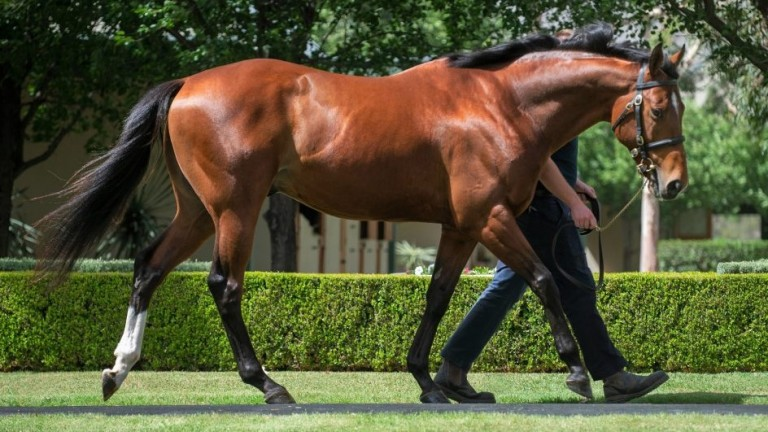Deep Impact's son Saxon Warrior: two yearlings from his first crop sold