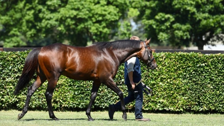 Time Test: National Stud resident one of the first-season sires catching the eye