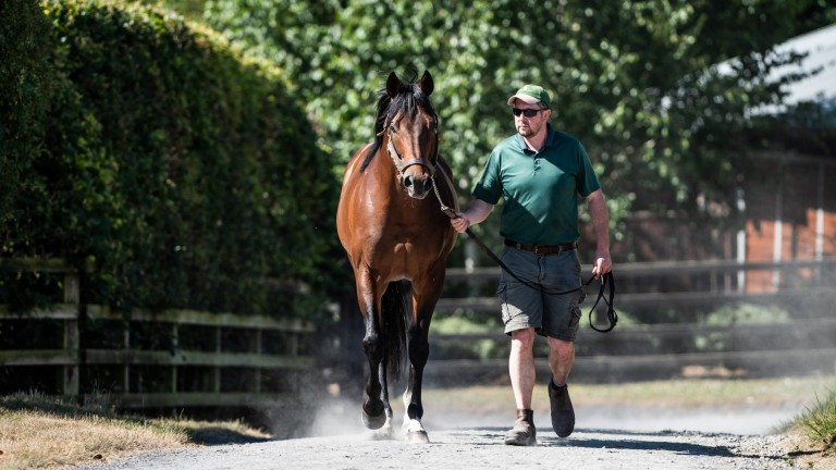 Make Believe: Mishriff's sire looks well-priced at €15,000