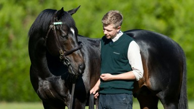 Bated Breath: Banstead Manor Stud resident stands at just £12,500 in 2021