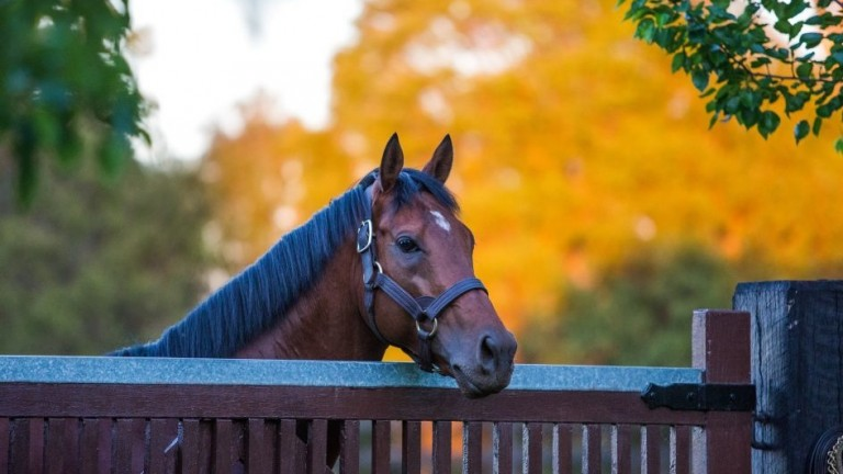 Zoffany: much-missed sire and a top-class performer himself