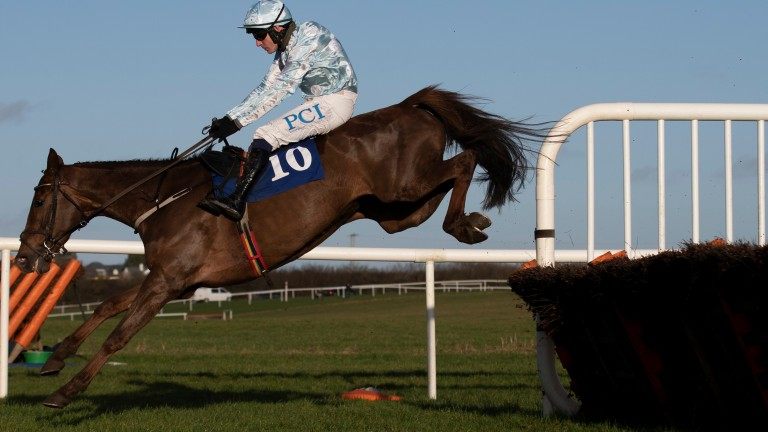 """Willie Mullins on Gauloise: """"I think she is going to improve again and the minimum trip is no problem to her"""""""
