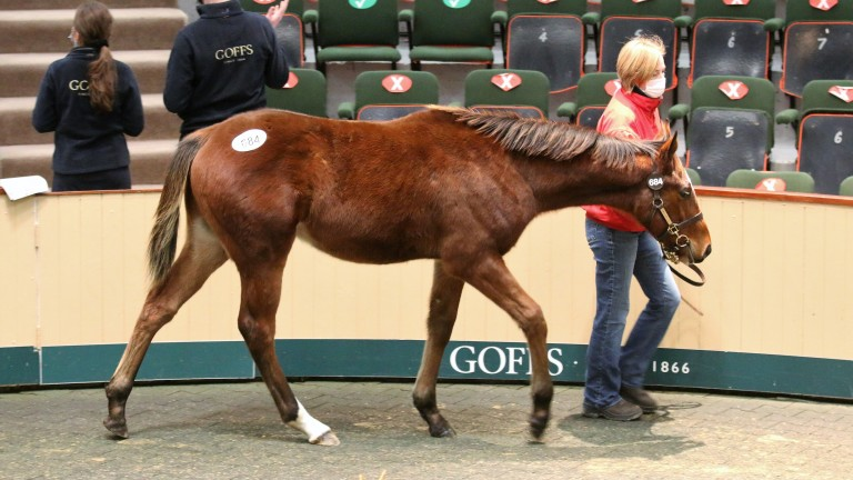 Lot 684: the Frankel colt bought by Juddmonte Farms for €440,000