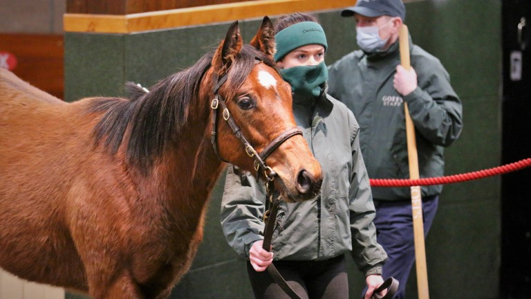 The Frankel colt out of Lily's Angel brings €440,000 from Paca Paca Farm
