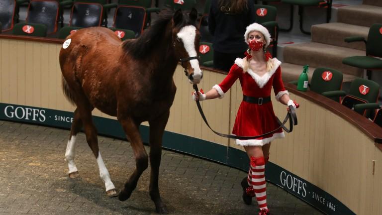 Brenda Shortt leading up the €100,000 Dark Angel colt while dressed as Mrs Claus