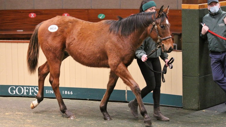 Frankel colt out of Lily's Angel in the Goffs ring