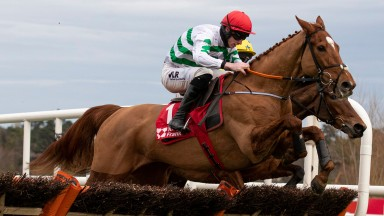 Zanahiyr: will be trained by Denise 'Sneezy' Foster in the JCB Triumph Hurdle at Cheltenham on Friday week