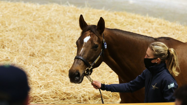 Beach Frolic in the Tattersalls sales ring