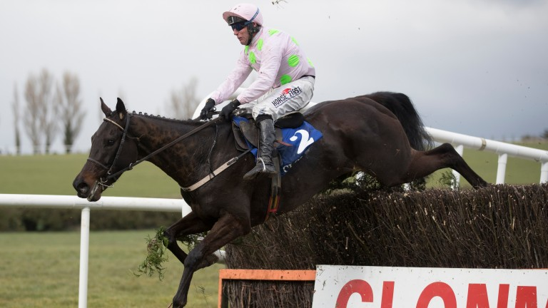 """Koshari: """"He has a lovely racing weight and could be well handicapped"""""""