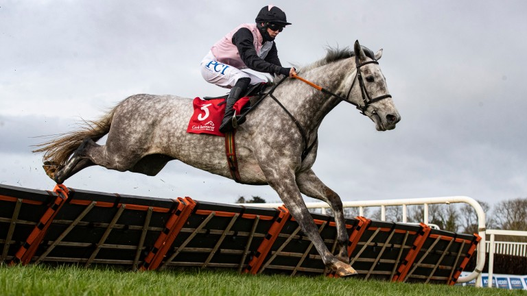 Gentlemansgame: imposing grey could run at Thurles on Thursday