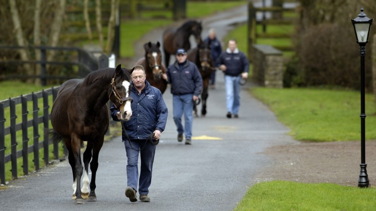 Sadler's Wells and handler Noel Stapleton lead Galileo, Montjeu and High Chaparral around Coolmore