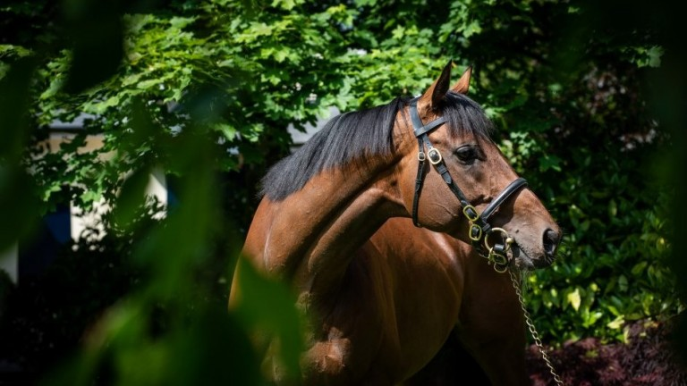 Churchill: among the first-crop two-year-old sires in 2021