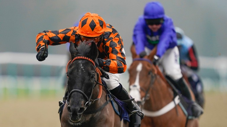 Black Kalanisi: got the better of two Grade 1-winning hurdlers on the all-weather at Lingfield