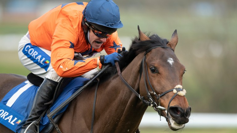 """Adagio: """"Horses get colic all the time, mild bouts, and they get over it without us even knowing about it,"""" says trainer David Pipe"""