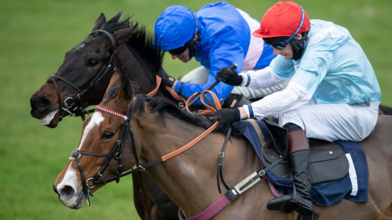 Witness Protection (near side) impresses trainer Martin Keighley