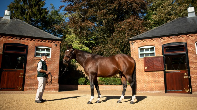 Frankel is the jewel in the Juddmonte pack