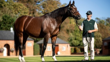 Frankel: will be presented by 149 two-year-olds from his most expensively bred crop to date