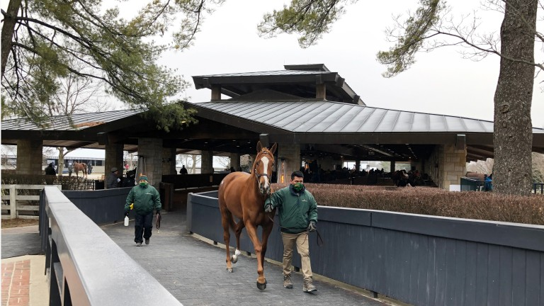 Regal Glory, who shared top honours at Keeneland on Tuesday when knocked down for $925,000