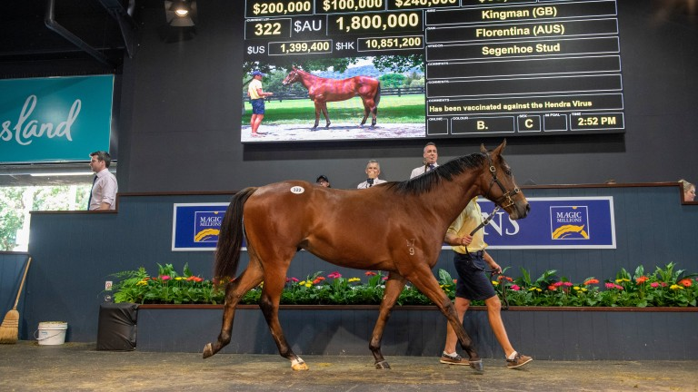 The sale-topping Kingman colt at Wednesday's session of the Magic Millions