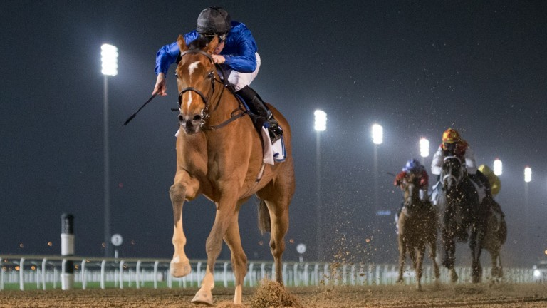 Dubai Love: last year's UAE 1,000 Guineas winner has been running with credit at Meydan during the winter months
