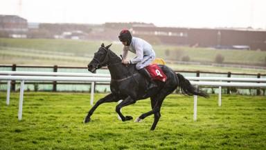 Grangee: seen here winning impressively at Galway under Patrick Mullins