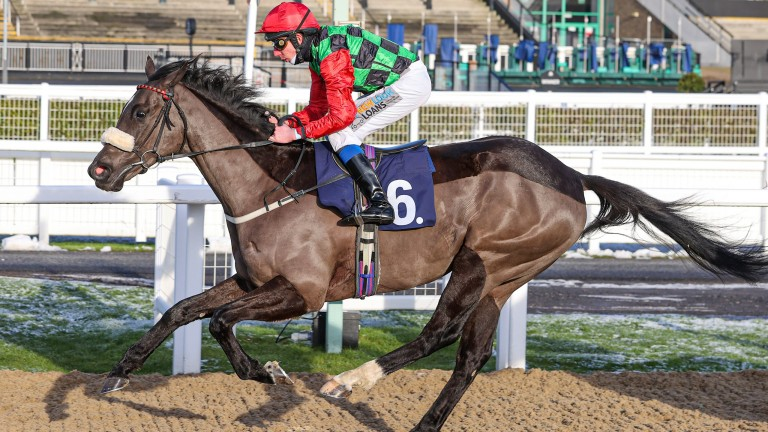 Melgate Majeure: a first winner for trainer Danny Brooke